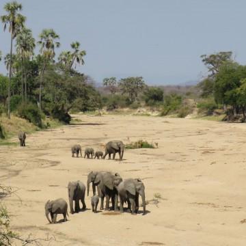 Ruaha Selous and Zanzibar