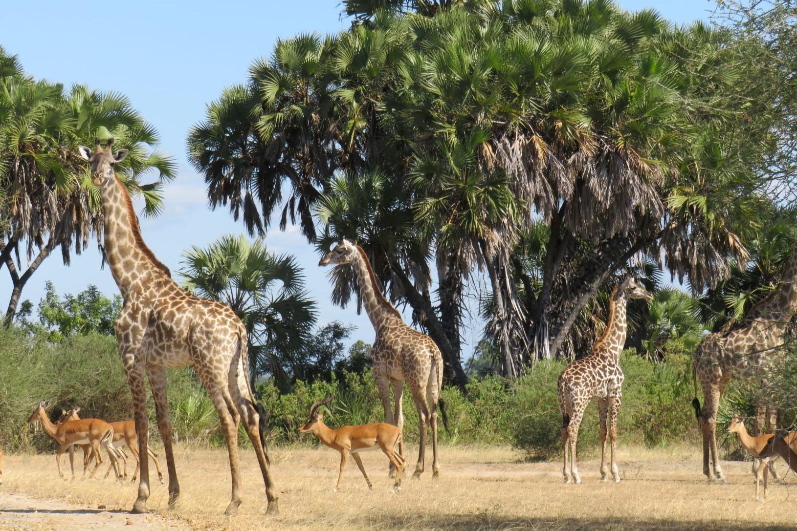 Ruaha Selous and Zanzibar 2